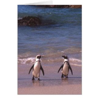 Paires de pingouin sur la carte de plage