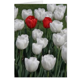 Paires parfaites (tulipes rouges et blanches) carte de vœux