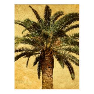 Palmier tropical vintage carte postale