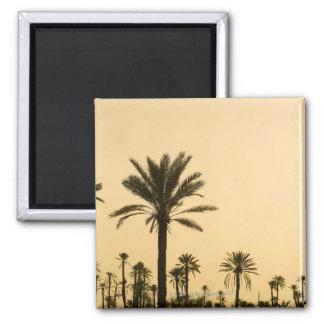 Palmiers au crépuscule, Maroc Magnet Carré