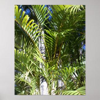 Palmiers hawaïens, cieux bleus, Maui, Hawaï Poster