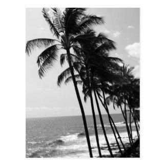Palmiers noirs et blancs carte postale