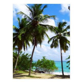 Palmiers sur la carte postale tropicale de paysage