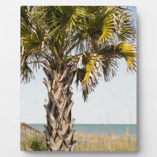 Palmiers sur la promenade de Côte Est de Myrtle Photos Sur Plaques