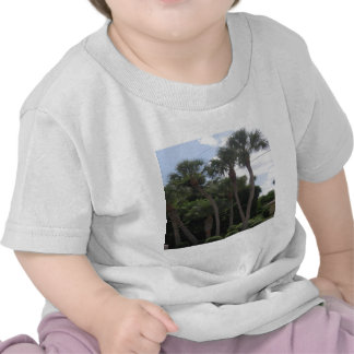 Palmiers T-shirts