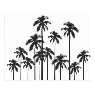 Palmiers tropicaux exotiques noirs et blancs carte postale
