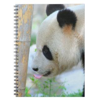 Panda20170502_by_JAMFoto Carnet