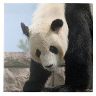 Panda20170506_by_JAMFoto Grand Carreau Carré