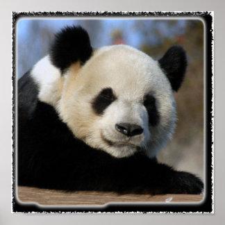 Panda Bear-8884e11x11fram Poster