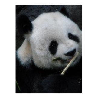 Panda Carte Postale