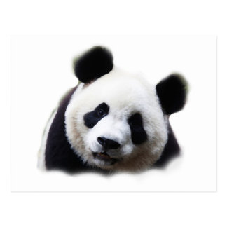 Panda Cartes Postales