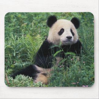 Panda géant dans l'herbe, vallée de Wolong, Sichua Tapis De Souris