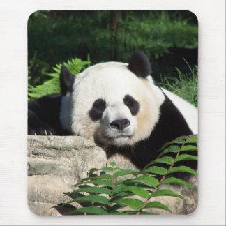 Panda géant faisant une sieste tapis de souris
