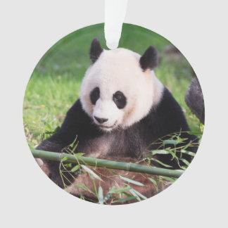Panda géant Mei Xiang