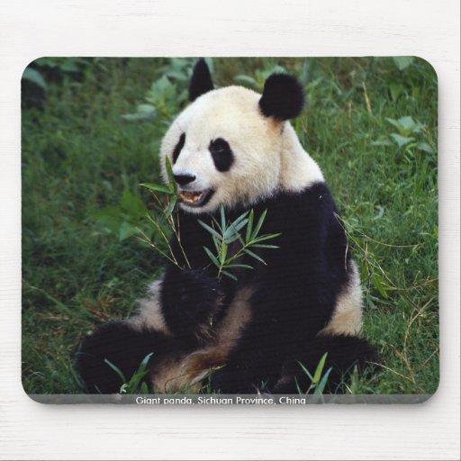 Panda géant, province de Sichuan, Chine Tapis De Souris