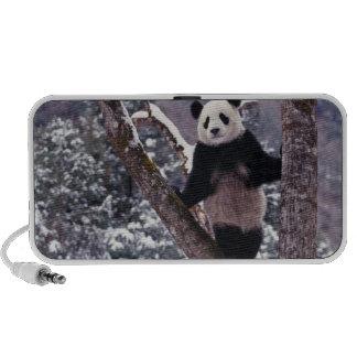 Panda géant se tenant sur l'arbre, Wolong, Sichuan Haut-parleur Mobile