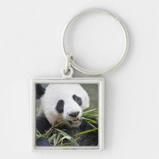 Panda mangeant des pousses de bambou Alluropoda 2 Porte-clé Carré Argenté