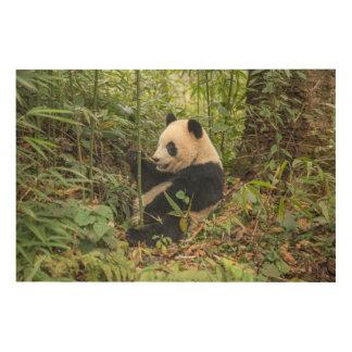 Panda mangeant le bambou impression sur bois
