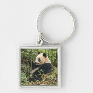 Panda mangeant le bambou porte-clé carré argenté