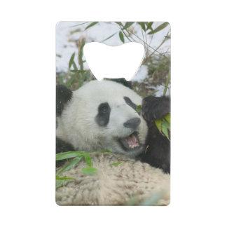 Panda mangeant le bambou sur la neige, Wolong,