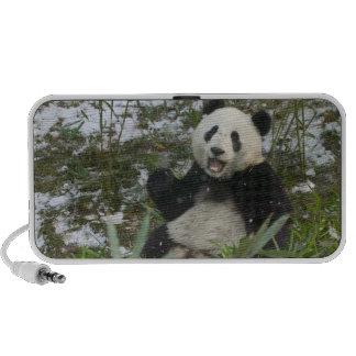 Panda mangeant le bambou sur la neige, Wolong, Sic Haut-parleur iPod
