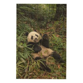 Panda mignon mangeant le bambou impression sur bois