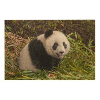 Panda parmi le bambou impression sur bois