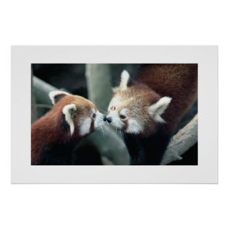 Panda rouge #1 poster