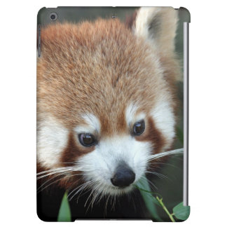 Panda rouge, zoo de Taronga, Sydney, Australie
