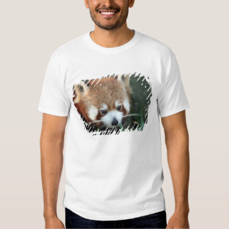 Panda rouge, zoo de Taronga, Sydney, Australie T-shirt