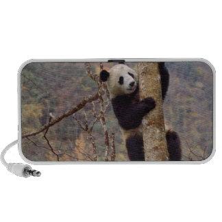 Panda sur l'arbre, Wolong, Sichuan, Chine Haut-parleurs Ordinateur Portable