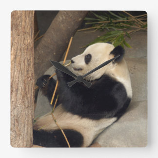 PandaM015 Pendules Murales
