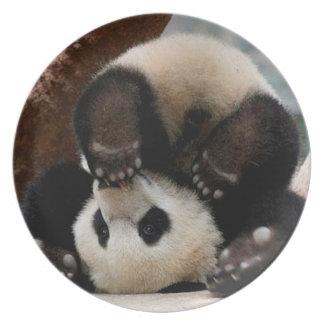 Pandas de bébé jouant - panda mignon de panda de assiette