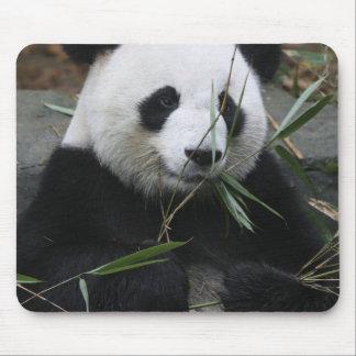 Pandas géants à la protection de panda géant et tapis de souris