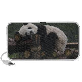 Pandas géants à la protection et aux 3 de panda gé mini haut-parleurs