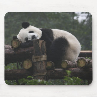 Pandas géants à la protection et aux 3 de panda gé tapis de souris