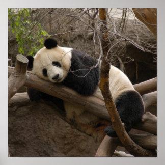 PandaSD003 Posters