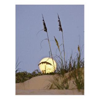 Paniculata d'Uniola d'avoine de mer) s'élevant sur Carte Postale