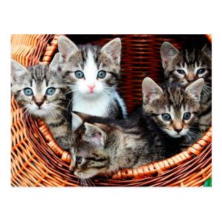 Panier de chaton carte postale