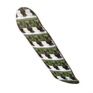 Panneau d'ours gris de rivière skateboard