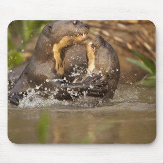 Pantanal loutre géante de NP, Brésil, rivière, Tapis De Souris