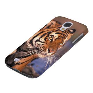 Panthera le Tigre de tigre de l'Asie, de l'Inde, d Coque Galaxy S4
