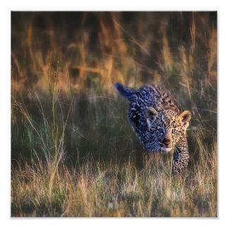 Panthera Pardus de CUB de léopard) comme vu dans Impression Photographique