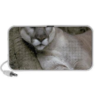 Panthère de la Floride, coryi de concolor de Felis Haut-parleur iPod