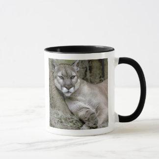 Panthère de la Floride, coryi de concolor de Mug