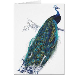 Paon bleu avec de belles plumes de queue carte de vœux