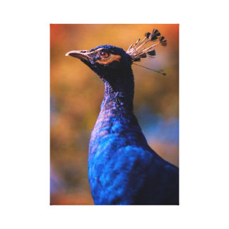 Paon bleu toile
