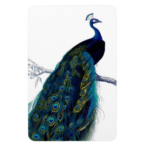 Paon coloré élégant bleu vintage magnet en vinyle