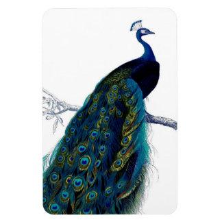 Paon coloré élégant bleu vintage magnets