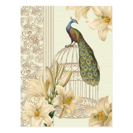 Paon et lis vintages sophistiqués de cage cartes postales